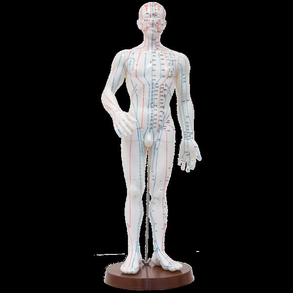 "Akupunkturmodell ""Ganzer Körper"" aus Kunststoff"